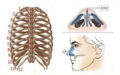 自体肋软骨隆鼻会吸收多少