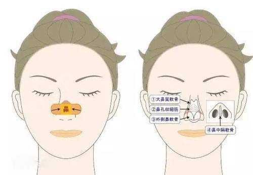 肉毒素缩鼻头需要多长时间