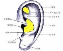耳软骨可以垫鼻基底吗