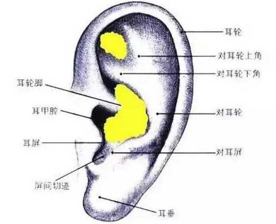 耳软骨适合垫鼻基底吗