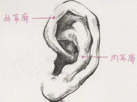 自体耳软骨垫鼻尖