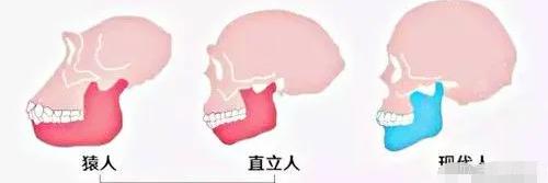 拔牙后窟窿恢复图