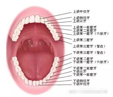 多生牙是什么?