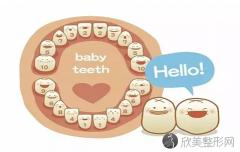 如何辨别乳牙和恒牙?恒牙和乳牙的主要区别